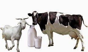 Kenali Susu Sapi dan Susu Kambing Beda